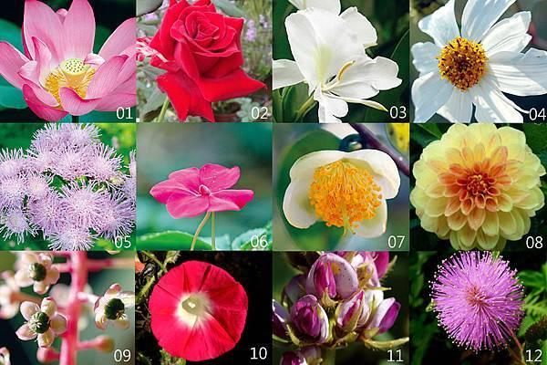 1-12朵花卡j