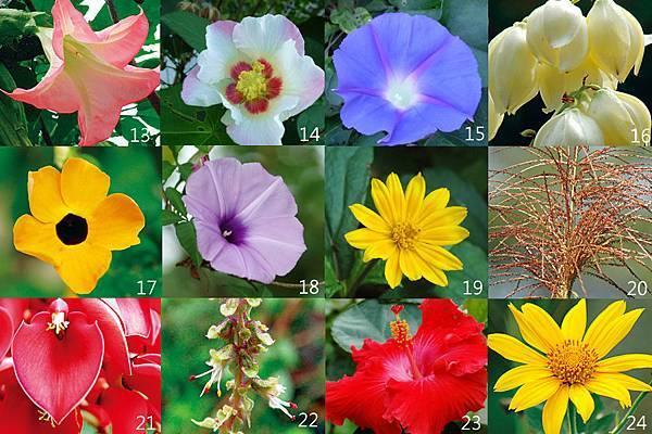 13-24朵花卡