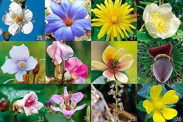 25-36朵花卡