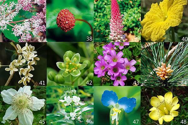37-48朵花卡