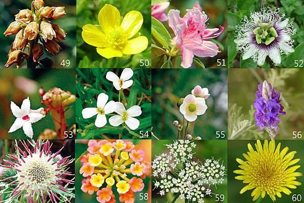 49-60朵花卡