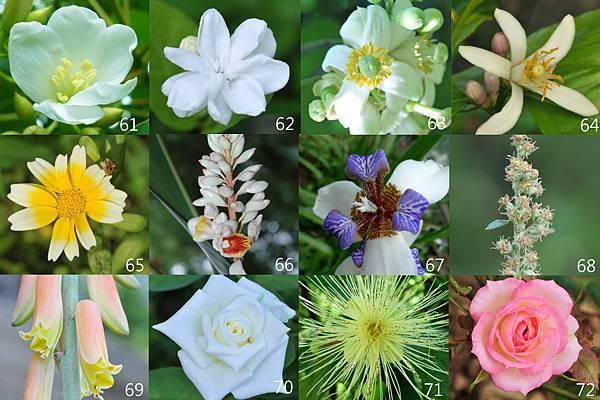 61-72朵花卡