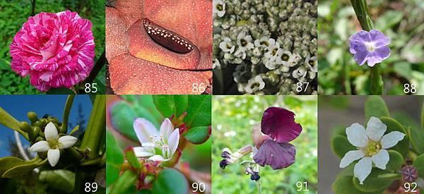 85-92朵花卡-1