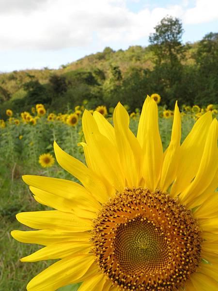 植物花朵中蘊藏著宇宙至高的大愛,女主人散發天性的母愛,是人類生生不息的本源,真摯的母愛像花一樣尊貴、一樣美。