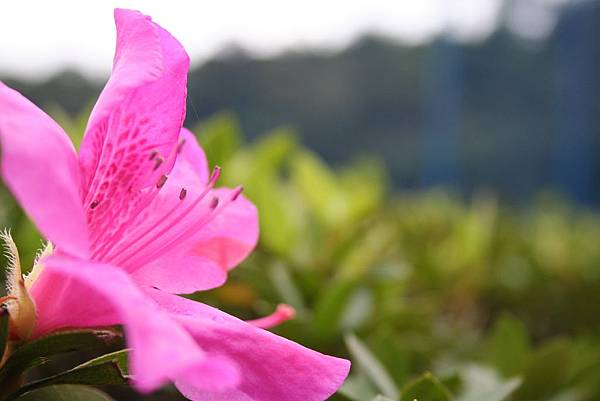 花氣讓人清醒的面對自己,並進而看到生命寬廣的存在意義。