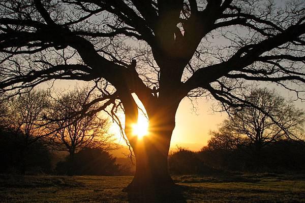 autumn-tree-1382832.jpg