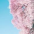 0807littleforest_S.jpg
