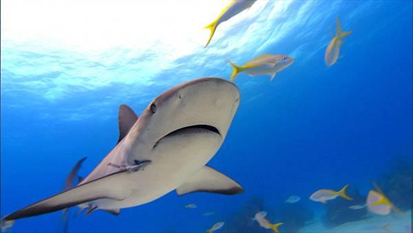 sharkwater2.jpg