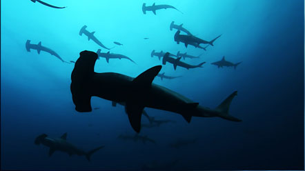 sharkwater.jpg
