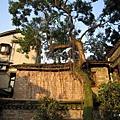 31-老樹爬窗.JPG