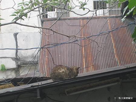 05-屋頂上有貓.JPG