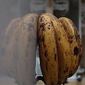 不願老去的香蕉