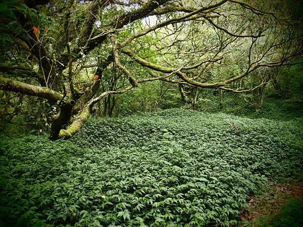 0005綠林