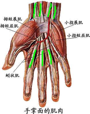 Image result for 小指展肌酸痛