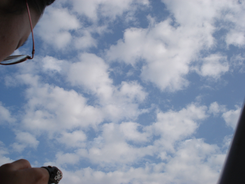 冰荷與藍天白雲