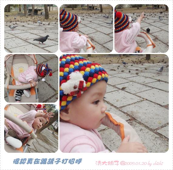 20090120-清大鴿子.jpg