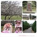 20090120-清大梅園.jpg