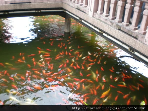 城隍廟區的小公園內的池