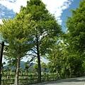 DSC_0573初英生態公園07_大小 .jpg