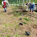領取植栽定點種植