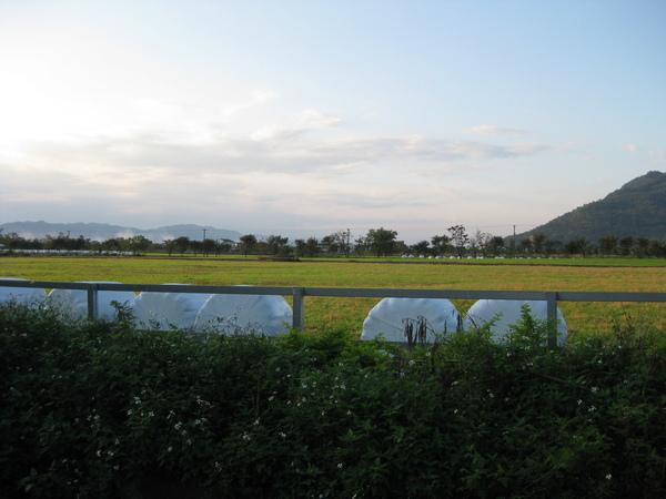 種畜繁殖場