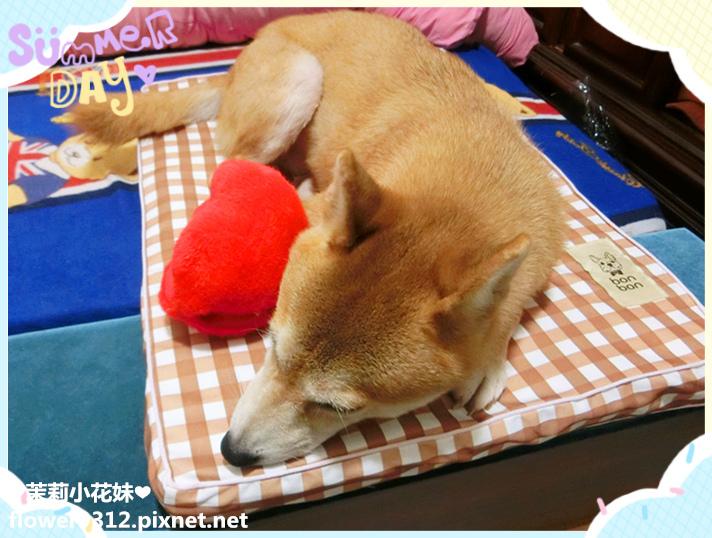 bonbon寵物寢具 airwave寵物墊 (1).jpg