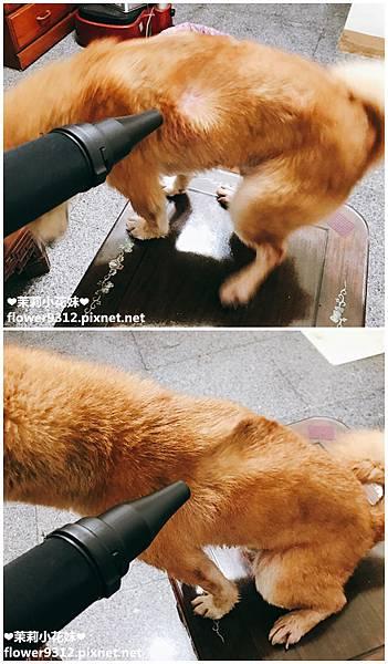 神寶寵物美容用品 毛小孩專用單馬達吹水機 (12).JPG