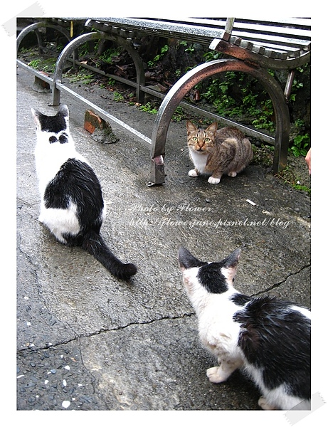 三隻貓.jpg