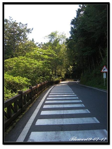 阿里山步道.jpg