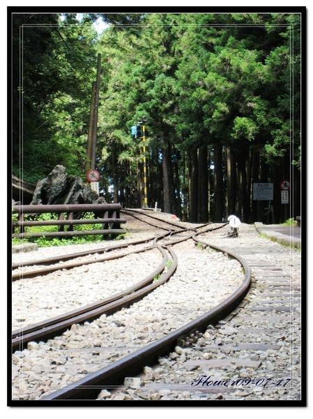 阿里山神木鐵軌.jpg