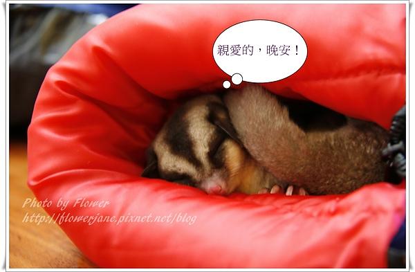 小甜甜睡著了.JPG