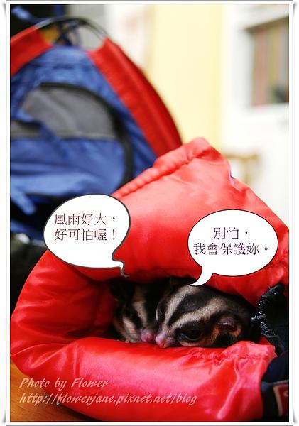 風雨生信心.JPG