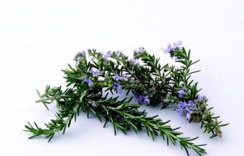 天然植物精油介紹