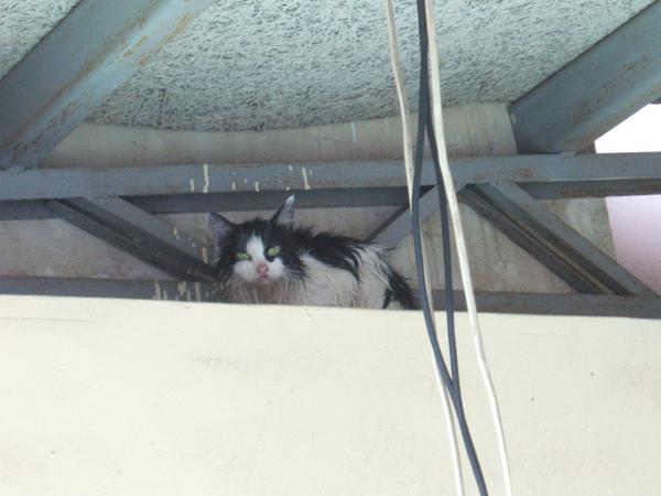 每次洗完早我都會躲到這~<屋簷>