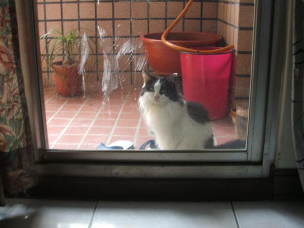 老大....讓我進去啦..