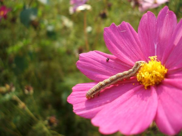 誰說變成蝴蝶才能採蜜的