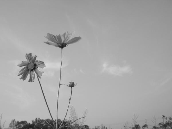 黑白的花花世界