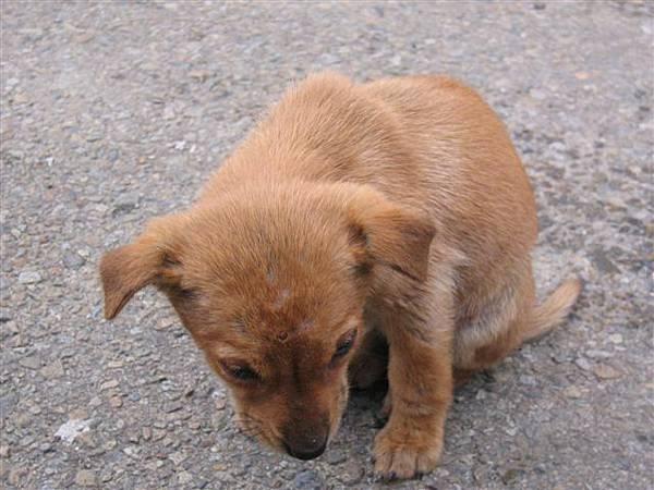三義火車站前的流浪小狗狗