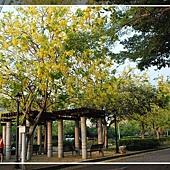 20090607_興大阿伯勒 (17).jpg