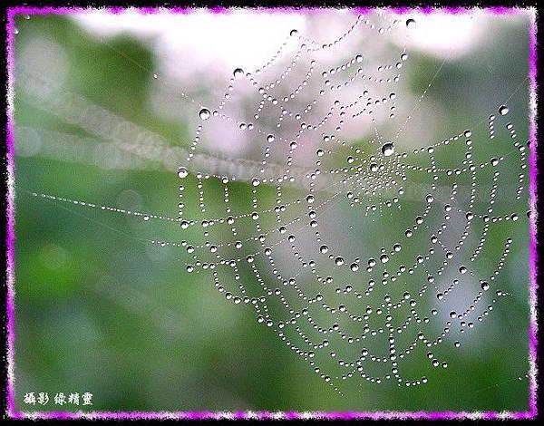 珍珠蜘蛛網