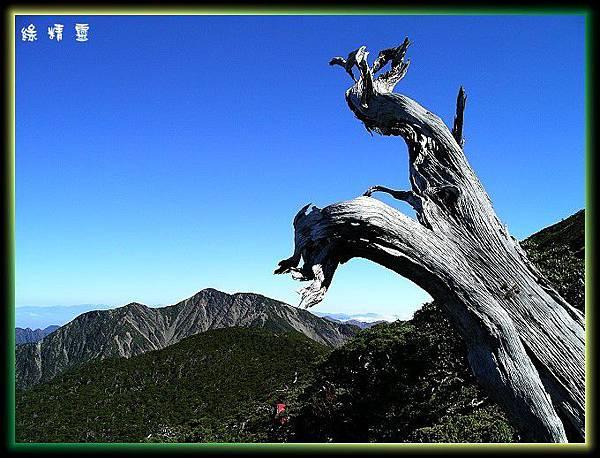 枯木與馬博拉斯山