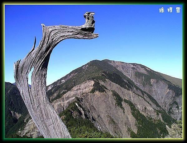 圓柏枯木與馬博