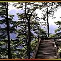 鐵杉與棧道