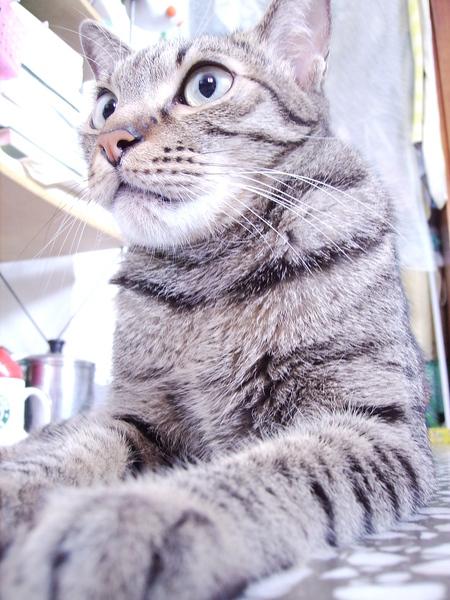 埃及貓石像