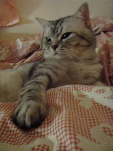 睡覺好溫暖被