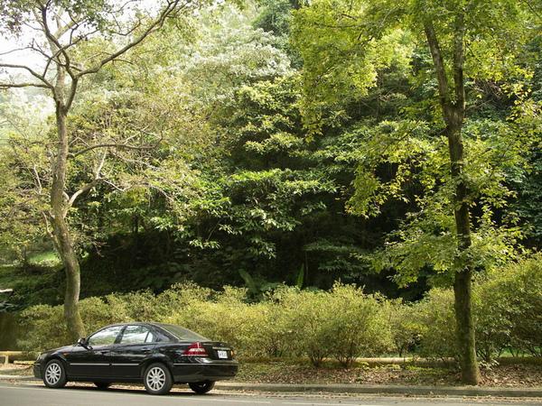 樹林 愛車