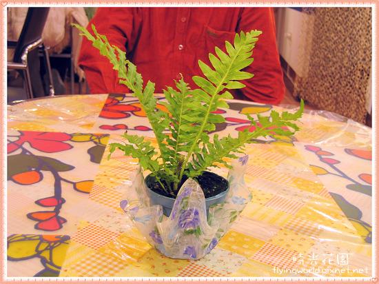 每一桌都會擺一個小盆栽