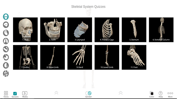 Skeletal systems Quizzes.png
