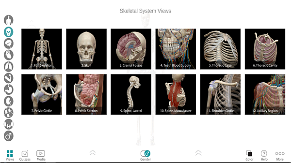 Skeletal systems view.png