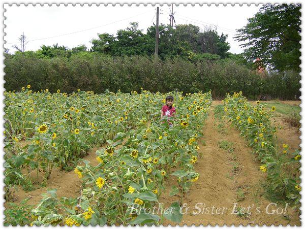 青林農場 (8).jpg